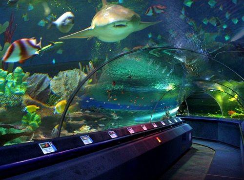 Чувство, что за тобой рыбы наблюдают в Океанариуме